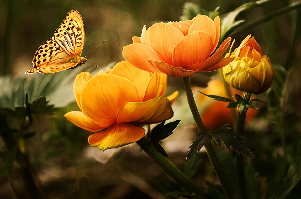 Les engrais naturels : la meilleure solution pour un jardin