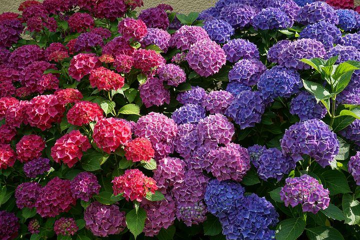 Les fleurs faciles à entretenir pour un jardin