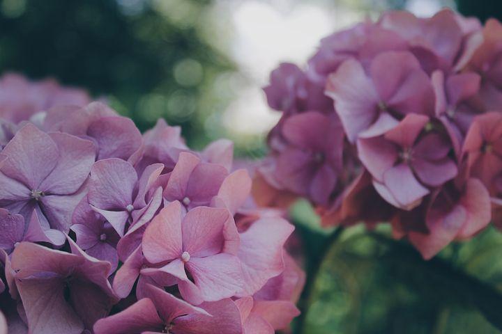 Quels produits utiliser dans un jardin pour éliminer les insectes ?